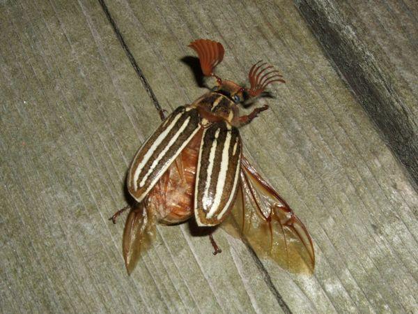 Broken Beetle 8-8-10