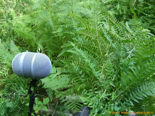 Fern Recording Photo