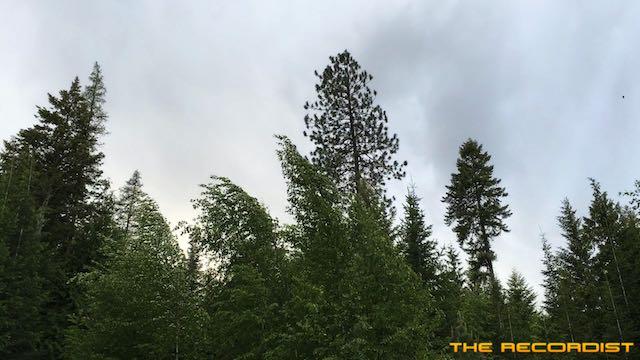 Rural Trees