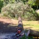 Tree-Recording-2014-07-26_4-640x380