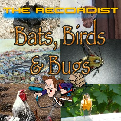 Bats-Birds-Bugs-HD-Pro-Cover-Art-400v2