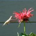 Bats-Birds-Bugs-HD-Pro_03