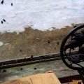 Bats-Birds-Bugs-HD-Pro_09
