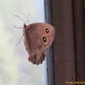 Bats-Birds-Bugs-HD-Pro_11
