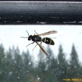 Flying-Insecte-HD-Pro-Photo_08