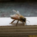 Flying-Insecte-HD-Pro-Photo_09